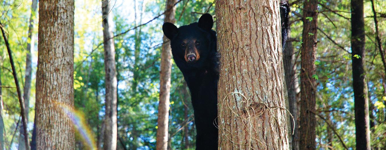 bear-slide