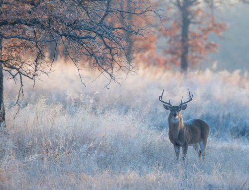 November deer hunts in the Cumberlands